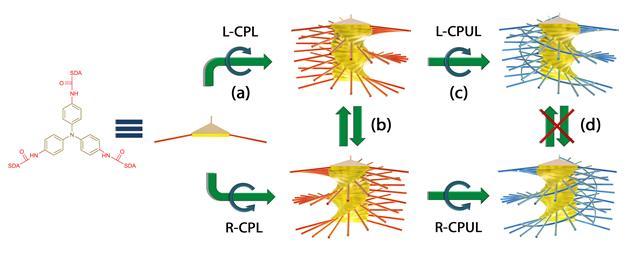 실험과정 모식도. 빛의 파장에 따라 나노구조체의 방향이 바뀌는 모습을 확인 할 수 있다. - KAIST 제공