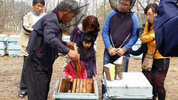 대전시가 서구 구봉산 인근에 마련한 시민 체험양봉장.시 관계자가 벌통을 열어 보이고 있다. - 대전시 제공