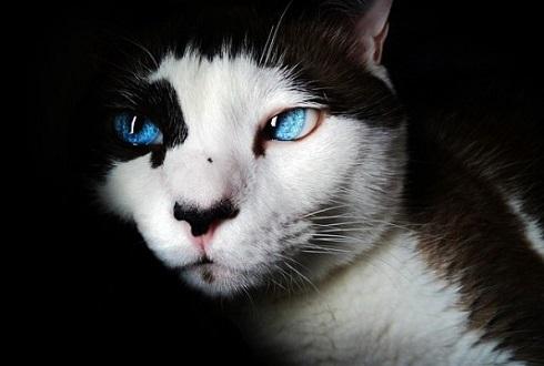 어둠 속에서 일곱 개의 고양이 눈을 보았네