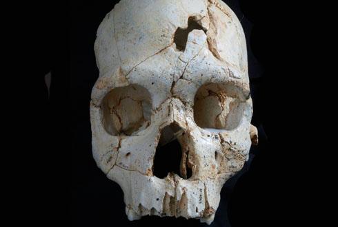 43만 년 전 살해 무기, 두개골 뼈조각에서 찾아