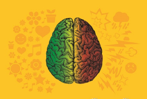 탄수화물은 뇌에 정말 나쁠까요?