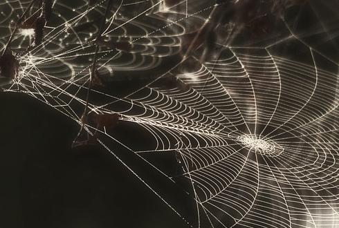 이것은 스파이더맨의 인공 거미줄?