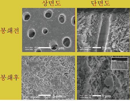 시멘트질 아래 존재하는 상아세관을 전자현미경으로 촬영한 모습. 연구진이 개발한 치료제는 상아세관을 봉쇄해 시린 이 증상을 막아준다. - 포스텍 제공