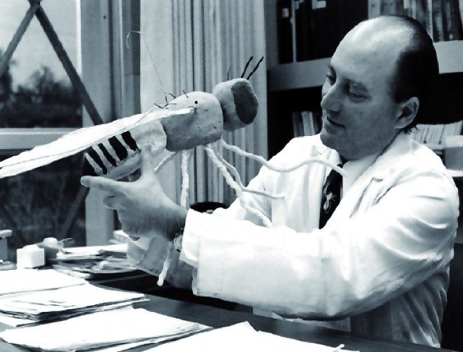1971년 대학원생 로널드 코놉카와 함께 생체시계 돌연변이 초파리를 발견한 시모어 벤저 교수. 커다란 초파리 모형을 들고 있다. - Harris WA 제공