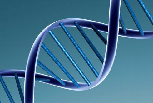 여섯 번째 DNA염기 존재하나?