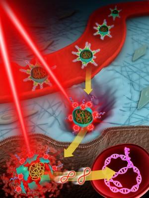 스마트 전달물질이 빛을 받아서 암세포에 유전자 치료제를 전달하는 과정을 설명하는 모식도. 이 물질은 근적외선 파장의 빛을 흡수해 활성산소를 내뿜으면서 암세포로 침투한 뒤 유전자를 방출한다. - 가톨릭대 제공