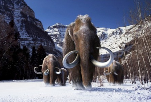 '유전적 사촌' 매머드와 코끼리, 뭐가 다를까요