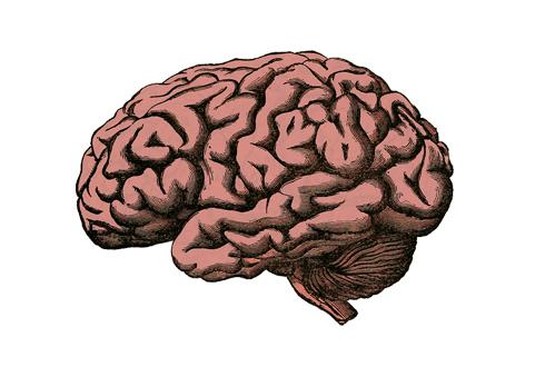 1991년 사이먼 르베이 박사의 동성애자 뇌 구조 차이 발견