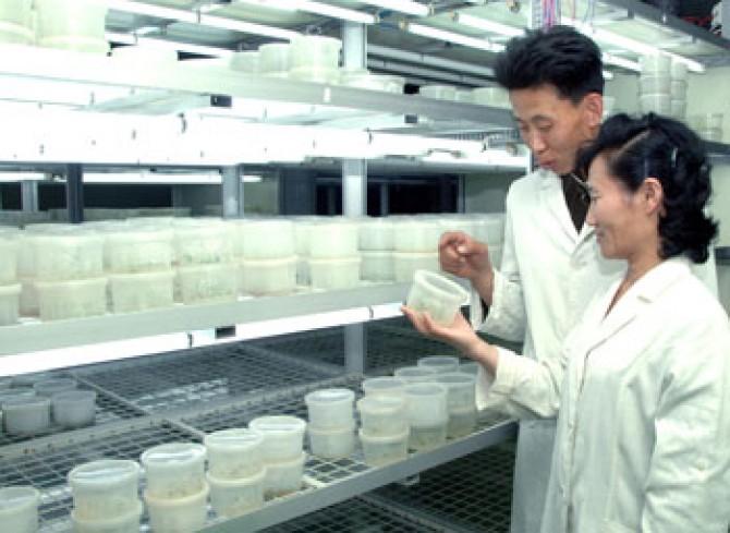북한 정부는 과학기술발전의 중요성을 강조하면서 외래어로 된 어려운 학술 용어를 고유어로 전환하는 어문정책을 펼쳤다. 사진은 북한 농업과학원 농업생물학연구소의 모습. - 동아DB 제공