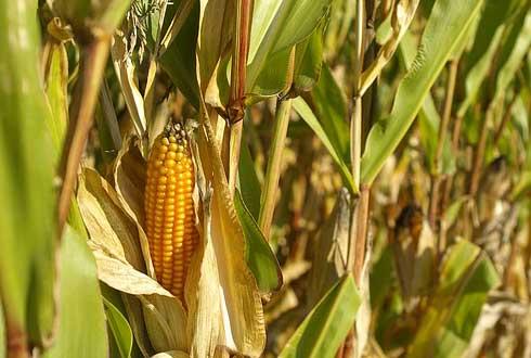 [GMO 르포] 美 듀폰 파이오니어, 몬샌토 연구센터 가 보니