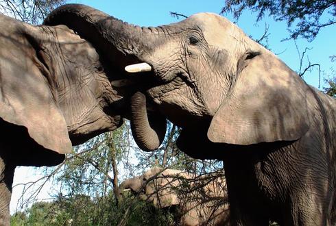 개코보다 코끼리 코!