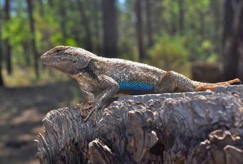 지구 뜨거워지면? 도마뱀 죽고 새 굶어 죽고 생태계 엉망
