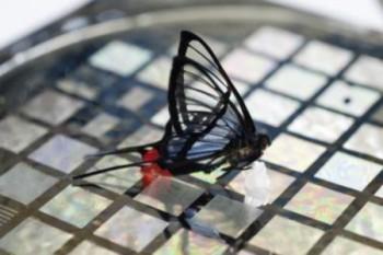 피부에 앉은 나비의 이동까지 파악할 수 있을 만큼 전자피부의 촉감은 발전 중이다. - 스탠포드대 제공