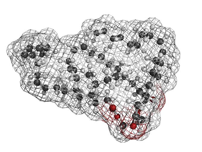 지방을 이루는 '트리글리세리드'의 분자모형 - GIB 제공