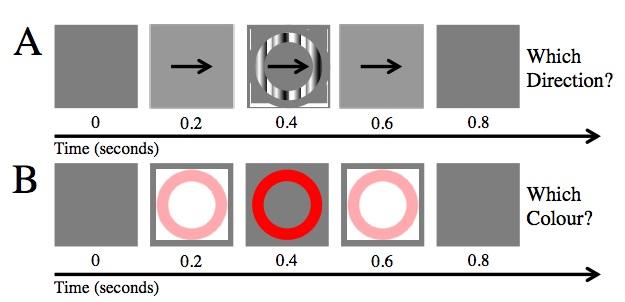 맹점의 크기를 줄이는 시각훈련. 위: 동작식별과제로 중심이 맹점의 중심과 같고 크기가 맹점과 비슷한 고리에 나타나는 물결이 어느 방향으로 움직이는지 맞추는 문제다. 아래: 색상식별과제 역시 고리에 나타나는 색상을 맞추는 문제다. 참가자들은 각 과제를 매일 200번씩 실시한다. 고리 크기는 참가자들이 70%를 맞추는 수준으로 조정된다. - 커런트 바이올로지 제공