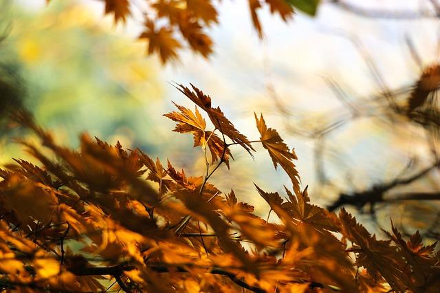 가을단풍 - pixabay 제공
