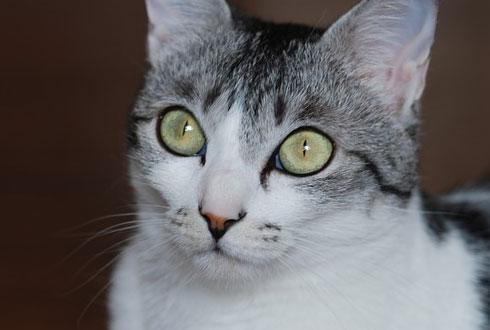 고양이 눈동자가 세로로 길쭉한 이유
