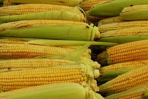 다이어트 하려면 콩과 옥수수는 조심하세요