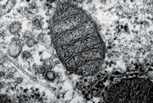 1998년 윌리엄 마틴 교수의 진핵생물 기원의 수소가설 제안