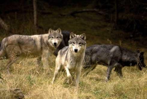 체르노빌 원전사고 29년, 야생 동물이 돌아왔다