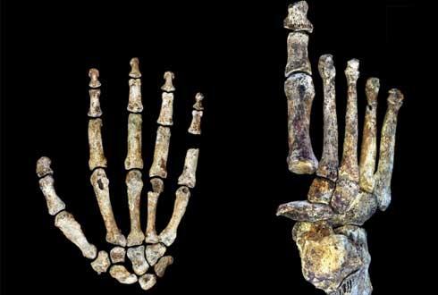 300만 년 전 살았던 새 인류, '호모 날레디'