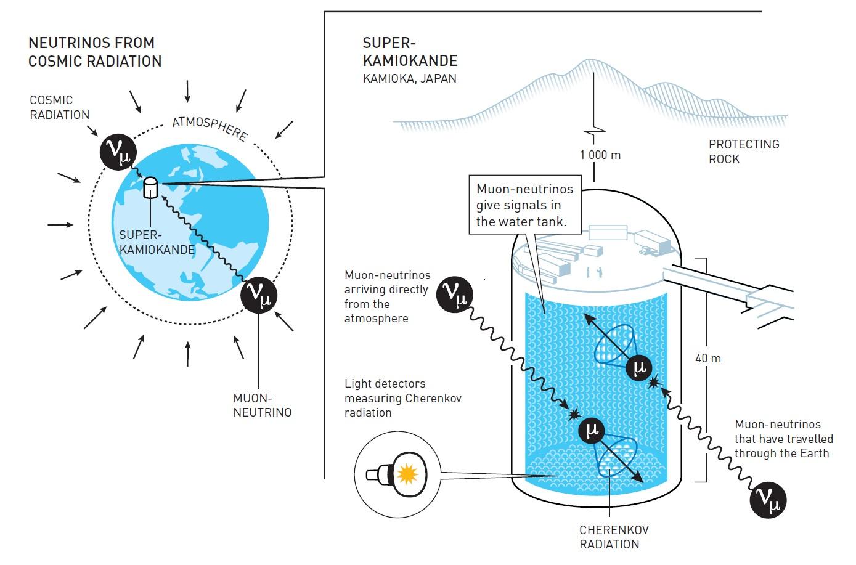 슈퍼-카미오칸데가 대기의 중성미자를 탐지해 진동변환을 증명한 실험 과정을 요약했다. 탱크 안에서 중성미자가 물 분자와 충돌할 때 빠르게 대전된 입자가 만들어진다. 이 과정에서 체렌코프 복사가 발생하며, 이는 빛 센서에 의해 측정된다. 체렌코프 복사의 형태와 강도는 이 반응을 일으킨 중성미자의 종류와 그것이 어디서 왔는지를 드러낸다. 위로부터 슈퍼-카미오칸데에 도착한 뮤온-중성미자는 전체 지구에서 이동해온 것 보다 더 많았다. 이것은 오래 이동해온 뮤온 중성미자가 그동안 다른 성질로 바뀌었다는 것을 나타낸다. 이번 실험에서는 295km 떨어진 J-PARC에서 만들어진 중성미자와 반중성미자를 탐지해 두 입자의 진동변환 특성이 다름을 추정해 대칭 깨짐이 있을 가능성이 높다고 결론 내렸다. 추가 데이터가 쌓이면 보다 분명히 확인할 수 있을 것으로 보인다. 노벨재단 제공