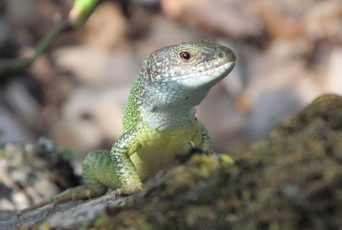 암수 성비 불균형, 포유류는 암컷이 조류는 수컷이 많다