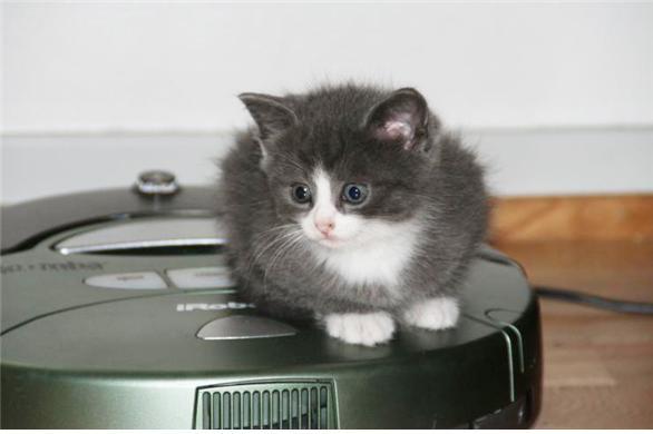 고양이를 태운 아이로보 룸바의 옛 모델. - Flickr(eiriknewth) 제공