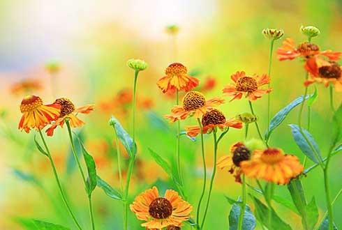 [화보] 청명한 하늘과 어울리는 가을에 피는 꽃 7선