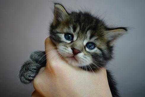 고양이 집사가 알아두면 좋은 8가지