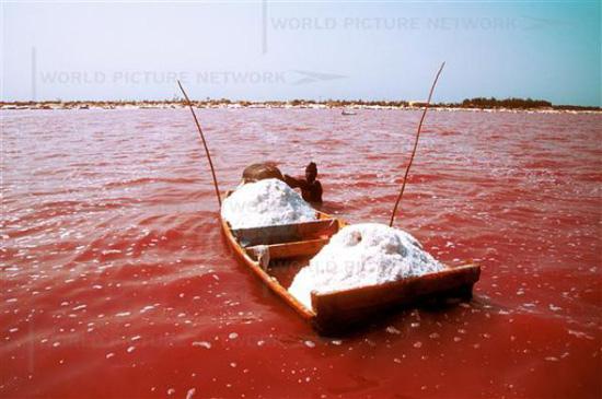 아프리카 세네갈에 있는 레트바 호수에서는 식물 플랑크톤의 영향을 받아 분홍색 소금이 나온다.  - lakeretba.com 제공