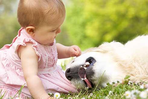 """""""강아지랑 아기랑 같이 키워도 되나요?"""""""