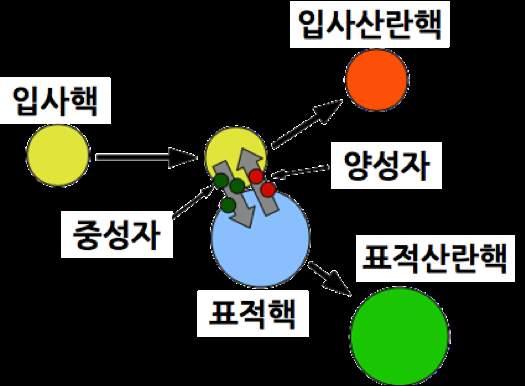연구진이 정지한 백금 원자핵(표적핵)에 가속한 크세논 원자핵(입사핵)을 충돌시켰더니 두 원자핵 사이에 양성자와 중성자가 이동하면서 중성자가 126개로 과잉한 미지의 원자핵(표적산란핵)이 만들어졌다. - 서울대 제공