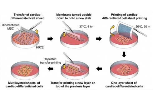 줄기세포 배양 효율 8배 높이는 기술 개발