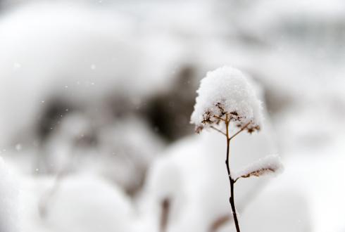 """""""슬퍼하지 마세요~ 2015년 하얀 첫눈이 온다구요~"""""""
