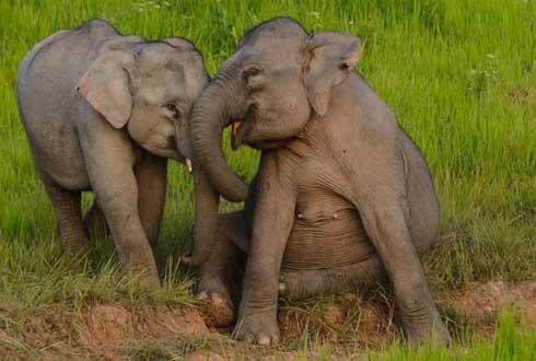 웃는 아기 코끼리 포착 '신기해라'
