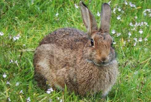 뚝딱뚝딱 종이 접어 살아있는 토끼에 이식