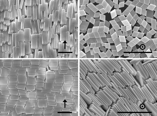 주사전자현미경을 통해 관찰한 폴덱쳐 자기정렬 현상 - KAIST 제공
