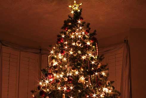 크리스마스 트리 닮은 별무리의 사연