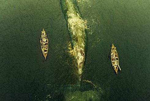 [영화 '하트 오브 더 씨'를 보고] 고래 잠수 능력의 비밀은…