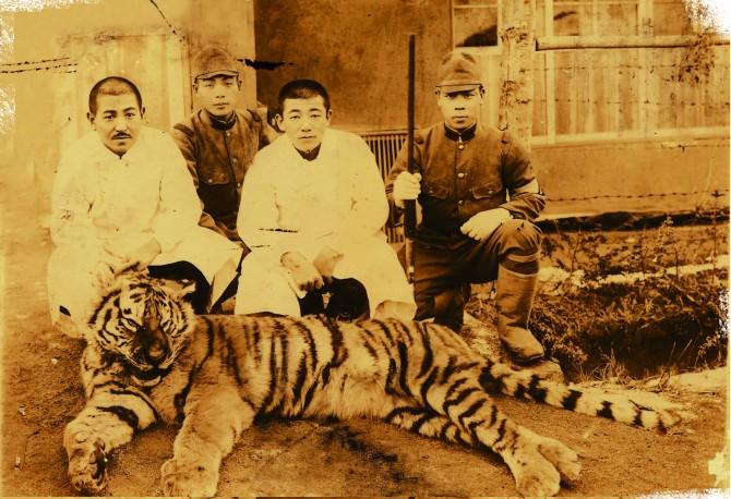 사진으로만 볼 수 있는 한국 호랑이의 흔적. 다시 백두대간에서 만날 날은 언제일까.  - 동아일보 제공