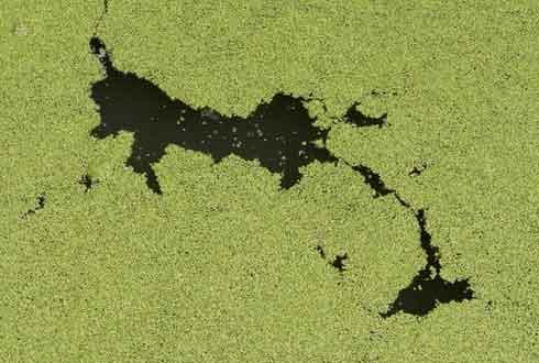 항균 은나노도 쌓이면 수중 생태계에 위험