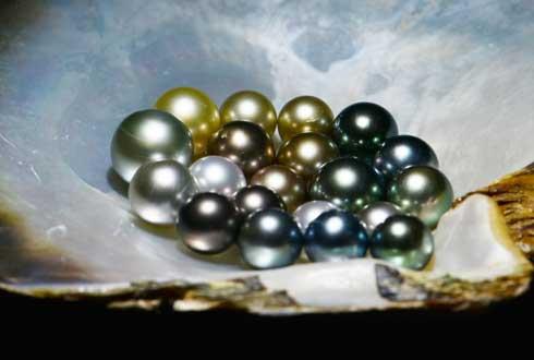 '바다의 보석' 흑진주 대량생산 가능해졌다