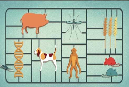 올해 최고의 과학기술 성과는…'크리스퍼(CRISPR)' 유전자 가위