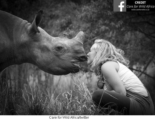 엄마 잃고 외로워~ 강아지 같은 코뿔소