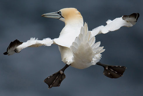 작은 날개로 비행 연습 중인 새끼 갈매기