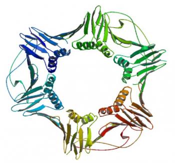 PCNA (Proliferating Cell Nuclear Antigen) 단백질 3차 구조 (source: Protein Data Bank). - (주)동아사이언스 제공
