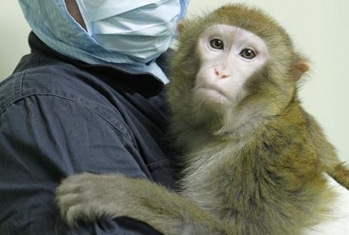 붉은원숭이가 사는 그곳, 국가영장류센터에 가다