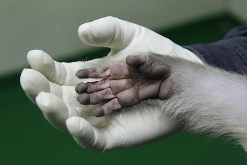 [丙申年 기획] 인류에게 도움 준 붉은털원숭이