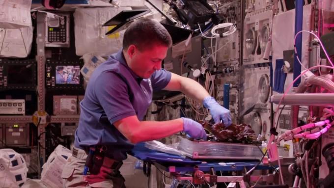 우주인이 국제우주정거장에서 '베지'를 이용해 상추를 재배하고 있다.